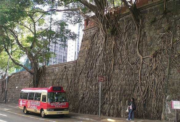 raices-de-arboles-en-la-pared